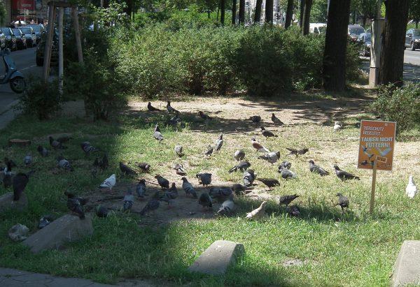 Tauben bitte nicht füttern!