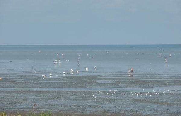 Wattenmeer Cuxhaven